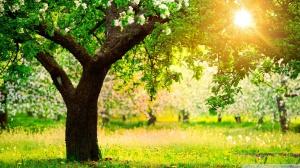 Springtime, sunny, tree, green